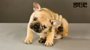 بهترین درمان های آلرژی برای حیوان خانگی شما