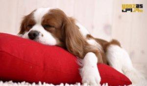 عجایب دیدن خواب در میان حیوانات