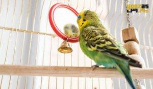 نقش اسباب بازی در تقویت هوش و سرگرمی پرندگان