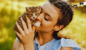راهنمای مراقبت از بچه گربه در خانه