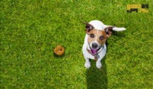 اختلال مدفوع خواری در سگ و راه های درمان آن