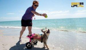 7 نکته برای شاد و سالم نگه داشتن یک سگ معلول
