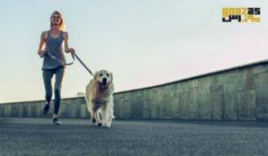 پیاده روی سگ ها، فواید و الزامات آن