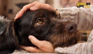 تاثیر نوازش سگ و گربه در کاهش استرس انسان
