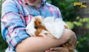 تاثیر نگهداری از حیوانات خانگی بر سلامت روحی